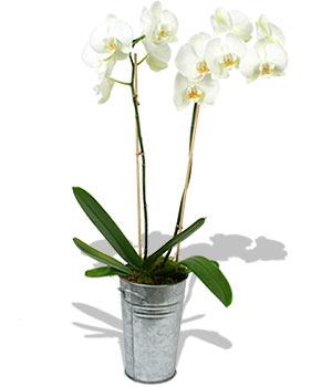 mariage et orchidée
