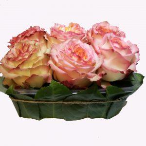 jardin de roses roses